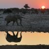 L'éléphant au point d'eau © Alain Balestreri