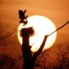 Cigogne blanche © Anthony Chuet