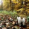 Le sol d'une forêt du Sundgau