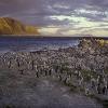 Colonie de manchots du Cap à Betty's bay (Afrique du sud) © Jean Barbery